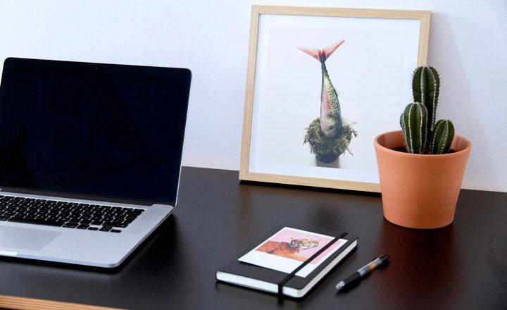 NÊN HAY KHÔNG NÊN đặt cây xương rồng trên bàn làm việc?