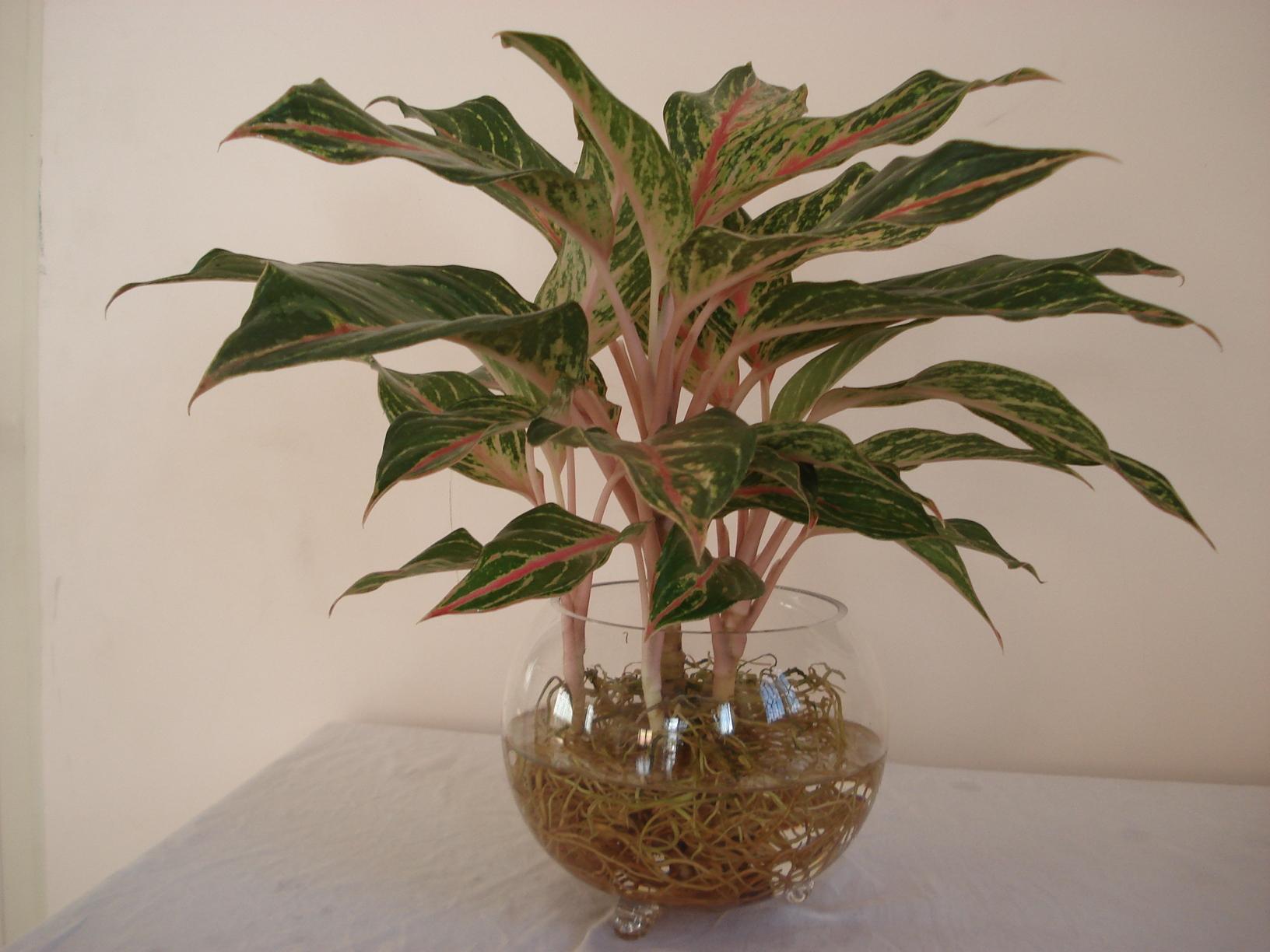 Màu sắc từ lá hoặc chậu cây thịnh vượng để bàn giúp bạn thư giãn ngay cả khi đang làm việc